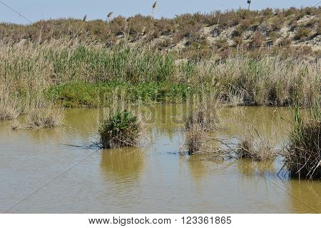 landscape marsh vegetation in the salt bonanza