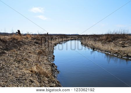 A river flowing in the wetland during spring