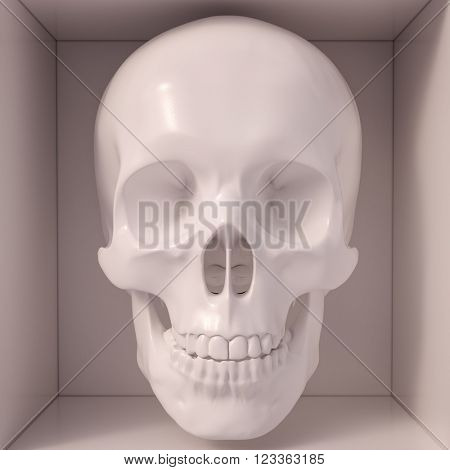 Medical model of a human skull often used in colleges and universities for teaching anatomical science