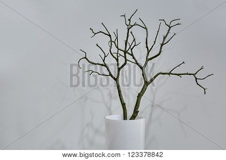 White vase with plant without leaves stands on the floor on the white wall background. Plant drops shadows on the wall. Close-up photo. Horizontal.