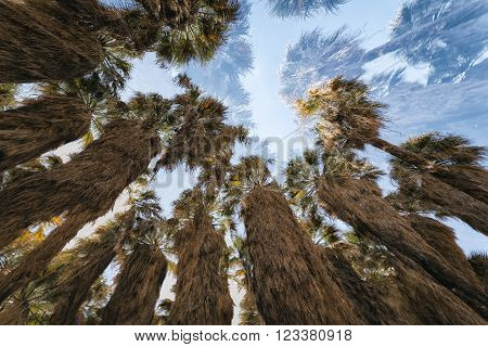 Palm Oasis In The Desert