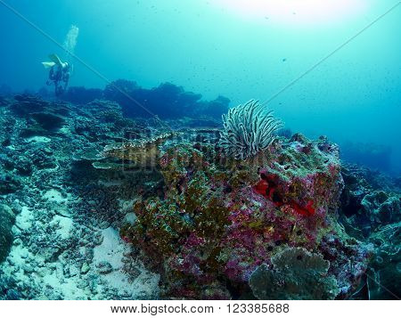 Scuba divers with reef coral in the similan Thailand