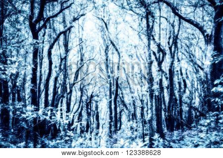 Exuberant trees in rainforrest, snow or winter process