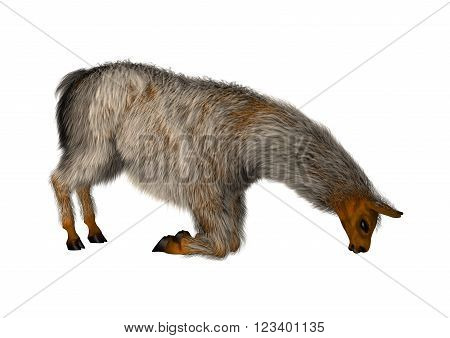 3D illustration of a llama or Lama glama, a domesticated South American camelid, isolated on white background