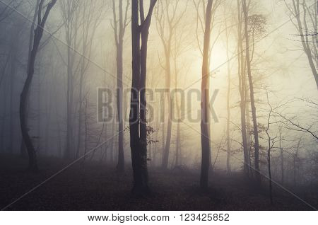 Sun rising in mysterious forest with fog in late autumn