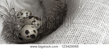 speckled quail eggs and a large feather