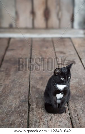 Black and white colours cat sitting in front of house wood floor and background.