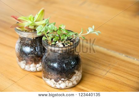 Little Kalanchoe in a glass vase on wood table