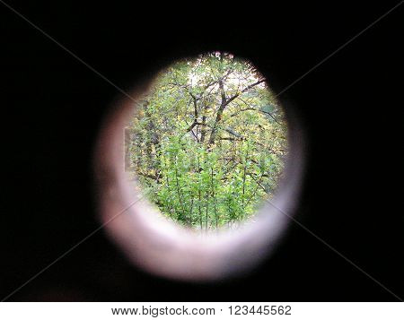 Woods from the hole, abstract background photo.