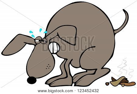 Illustration of a brown dog humped up and straining to defecate.