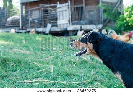 Happy dog outdoors playing, enjoying nature. Men best friend