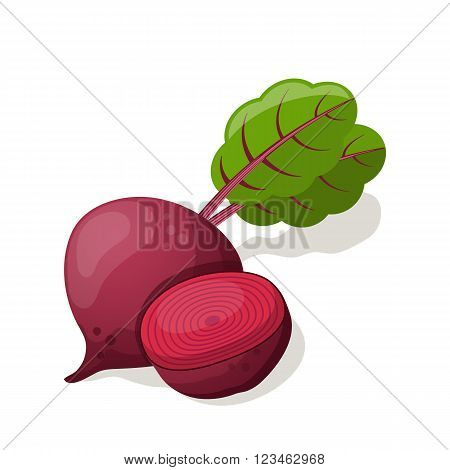 Beet isolated on white. Vector illustration EPS10