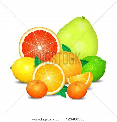 Fruit of citrus set of citrus fruit. Citrus fruits (orange lemon lime grapefruit pomelo mandarin). Realistic vector illustration on white background