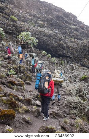 Kilimanjaro, Tanzania - January 19, 2016: Tourists and porters, the way to Kilimanjaro top on January 19, 2016 in Kilimanjaro, Tanzania
