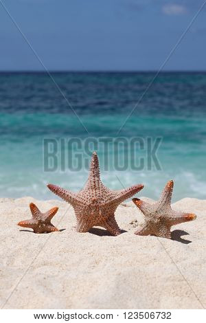 Three starfish on sand of tropical beach at Philippines