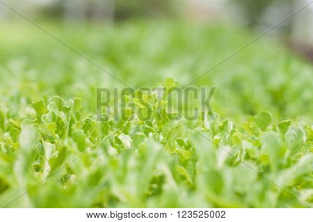 Young green oak in organic farm, stock photo
