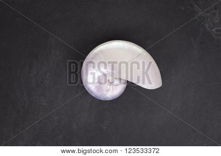 Pearl Shell Of A  Chambered Nautilus On Black Slate Background.