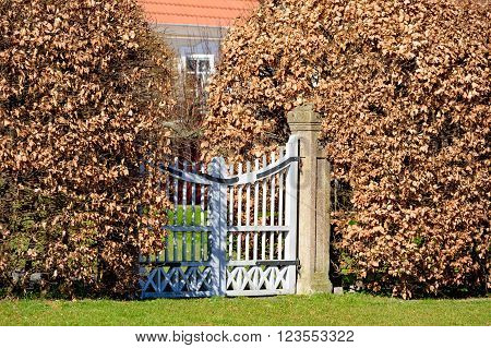 Closed white garden gate with beech hedges on either sides. Leaves are brown.