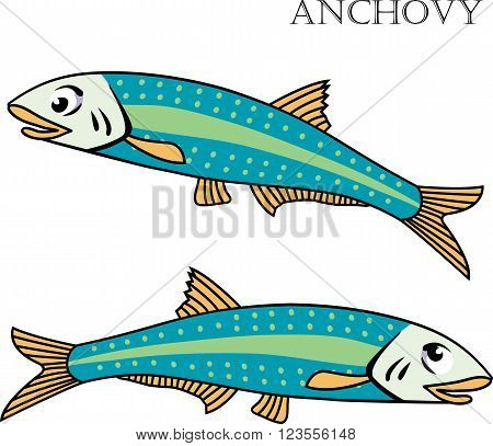 Anchovy color cartoon vector illustration. Anchovy fishes on white background. Anchovy vector. Anchovy illustration. Anchovy fish isolated vector.
