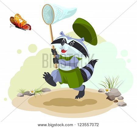 Scout raccoon butterfly catches. Entomologist with butterfly net. Summer leisure. Cartoon illustration in vector format