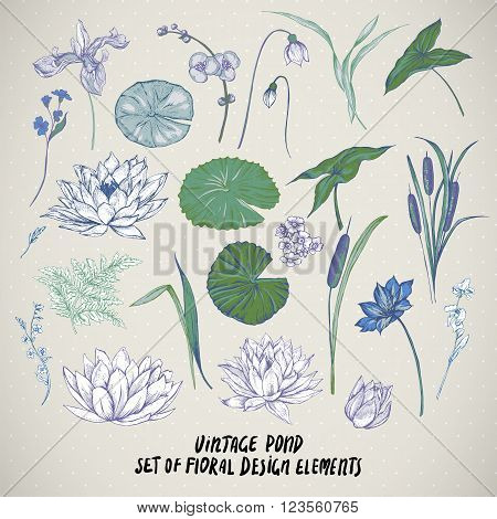 Set of vintage pond water flowers vector elements, Botanical shabby chic illustration reeds, lily, iris, wildflowers leaves and twigs.
