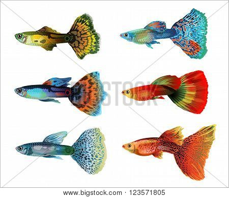 Six colorful aquarium fish on white background