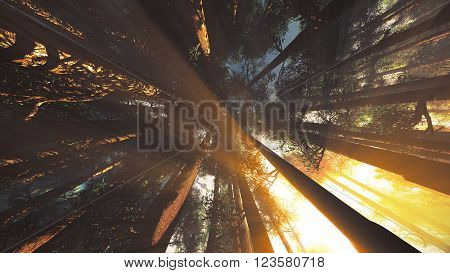 Mystic Fantasy Woods Lightrays Low Angle