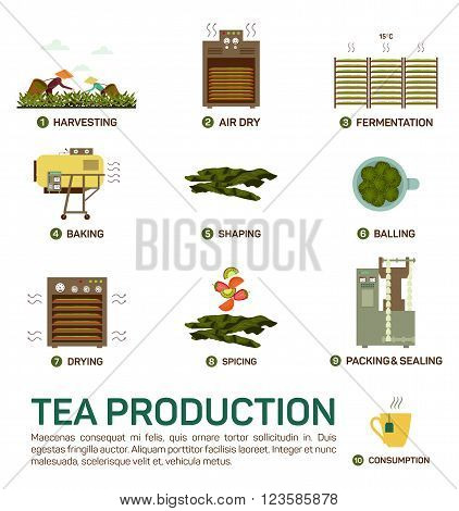 Seamless vector illustration of tea production, air dry, fermentation, baking and shaping, balling, drying, spicing and packing and sealing, consumption, eps 10