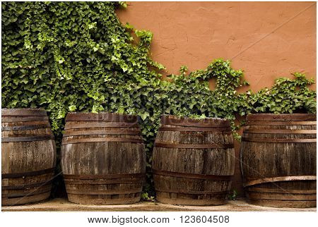 Antiguas botas de vino restauradas con fondo naturaleza