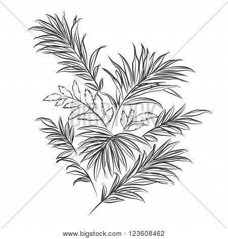 Palm leaves. Black outline on white background. Vector illustration
