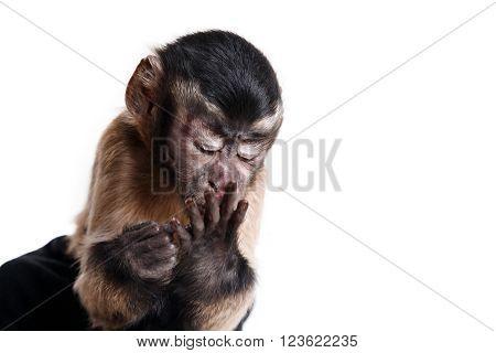 Little Monkey, A Portrait In The Studio
