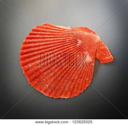Red Seashell