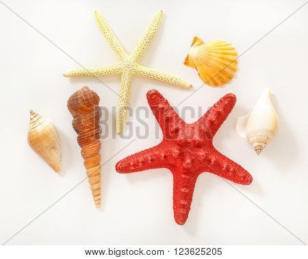 Collection Of Sea Shells And Stars