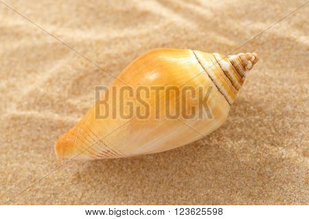 Seashell In Wavy Sand