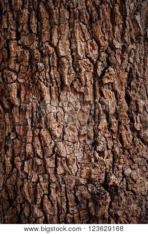 Wooden texture background. Tree Texture. Tree Background. Crack Tree