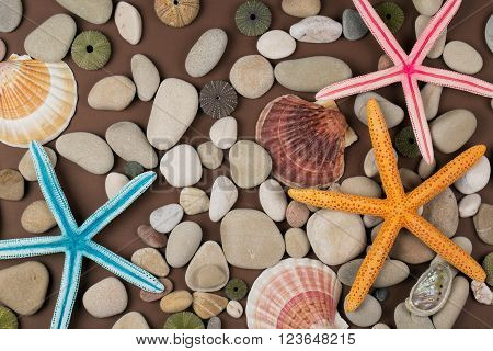 colorful seashell and starfish for a background