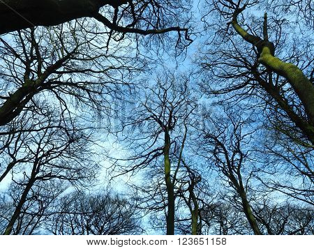 Bare winter trees with a blue sky