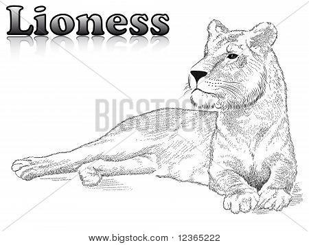 Lioness, tattoo
