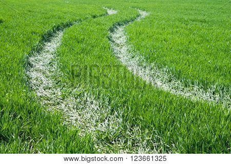 Background Of Green Grass And Road