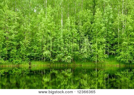 Boreal Forest reflected in river natural background