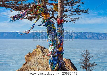 Lonely tree on a background of the holy Shamanka on cape Burhan. Olkhon Island in the Siberian Lake Baikal in winter. Russia. Ice on Lake Baikal. Horizontal landscape