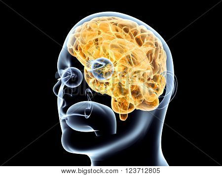 The human Brain. A 3D rendered illustration.