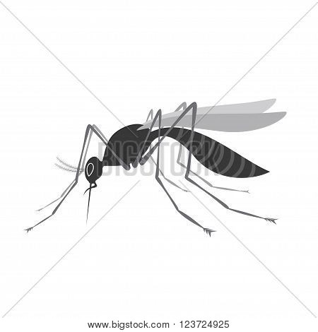 Mosquito with stinger isolated on white background. Zika virus. West Nile fever. Stock vector illustration.
