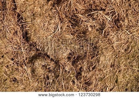 Old Decay Harvested Grass In Big Green Smell Mound In Corner Of Garden. Organic Fertilizer.