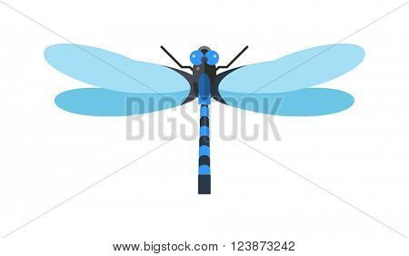 Dragonfly anax imperator male blue emperor with big eyes nature insect animal wildlife vector illustration.