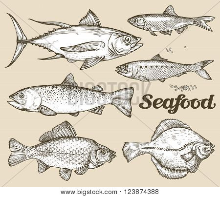 collection of different fish drawn by hand. vector illustration