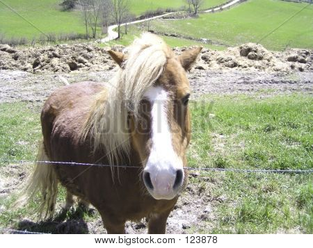 Horse behind a fence poster
