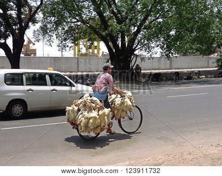 Yangon Myanmar - April 16 :   Burmese man riding a bicycle with live chickens in (Rangoon) Yangon (Burma) Myanmar April 16 2013 in Yangon Myanmar.