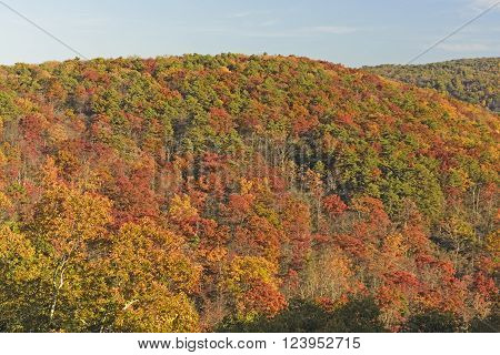 Hillside Erupting in Fall Colors in Shenandoah National Park in Virginia