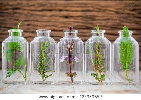 Bottles of herb thyme basil flower rosemary parsley and sage leaf on wooden background.